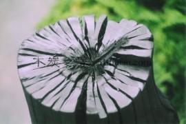 出口级优质花梨木橡木白炭