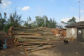 海南海口烧制原木木炭窑被人举报 木炭厂被查