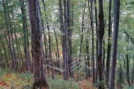 《全国林业生物质能发展规划(2011-2020年)》对我们的现实意义