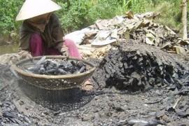 新闻:可怜的越南南部烧红树林木炭的人