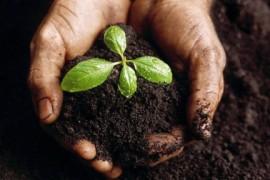 生物炭与农业可持续发展