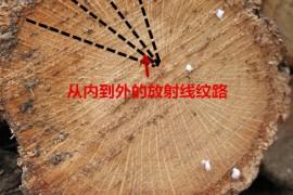 如何找到适合烧制白炭备长炭树种的简单方法